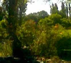 Imagen007 detalle pizcala