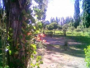 Imagen009 piscalas con hojas de álamos