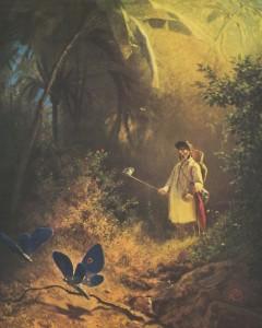 Schmetterlingfänger Sp Buch