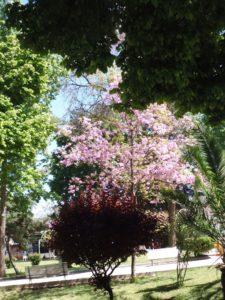 el-talar-iii-lap-rosas-bordo-qda-014