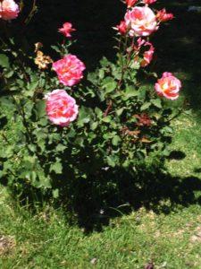 el-talar-iii-lap-rosas-bordo-qda-025