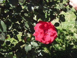 el-talar-iii-lap-rosas-bordo-qda-026